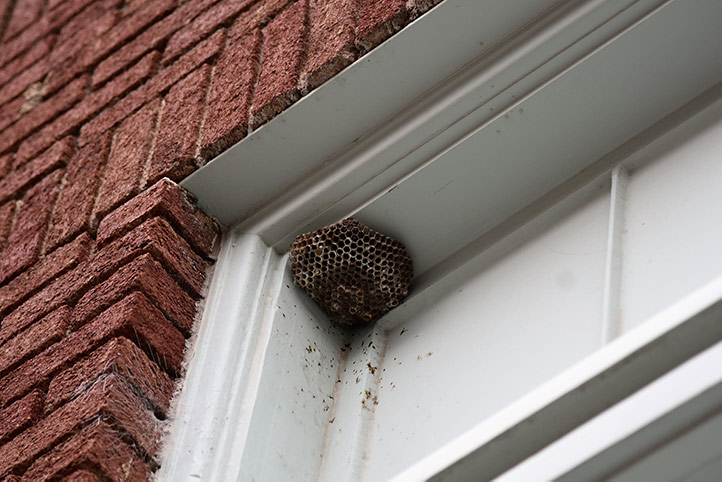We provide a wasp nest removal service for domestic and commercial properties in Twickenham.